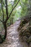 Weg tussen bomen in nationaal park dichtbij de stad Nesher Stock Fotografie