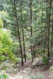 Weg tussen bomen in nationaal park dichtbij de stad Nesher Stock Foto