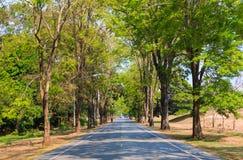 Weg tussen de bomen Royalty-vrije Stock Foto's