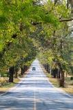 Weg tussen de bomen Stock Foto