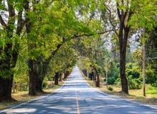 Weg tussen de bomen Royalty-vrije Stock Afbeeldingen
