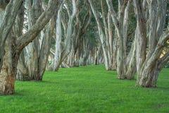 Weg tussen de bomen Stock Afbeelding
