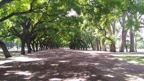 Weg tussen de bomen, Bosques DE Palermo, Buenos aires - Argen royalty-vrije stock afbeelding