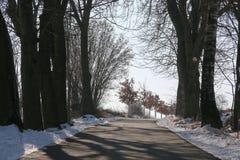 Weg tussen de bomen stock afbeeldingen