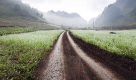 Weg tussen gebieden van bloemen in MocChau, SonLa, Vietnam Stock Foto