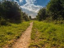 Weg tussen gras en struiken royalty-vrije stock afbeelding