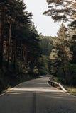 Weg tussen pijnbomen in de bergen stock foto's