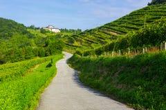 Weg tussen wijngaarden met een landbouwbedrijf op de achtergrond in Zarautz Stock Foto's
