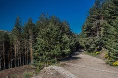 Weg und Bäume für das Wandern Lizenzfreies Stockfoto