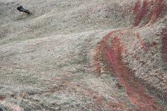 Weg und ein toter Baum mit kleinen Hügeln Stockfoto