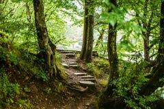 Weg und Schritte im schönen magischen Wald Stockfotos