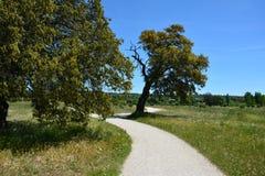 Weg unter Bäumen Lizenzfreie Stockbilder