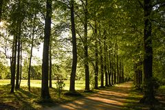 Weg unter den Bäumen Stockbild