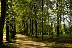 Weg unter den Bäumen Lizenzfreies Stockfoto