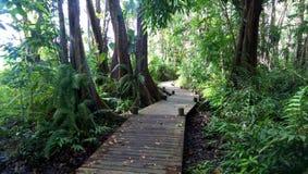 Weg unter der Überdachung im Mangrovensumpf lizenzfreie stockbilder