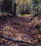 Weg van bladeren Stock Afbeelding