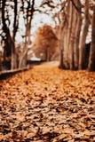 Weg van bladeren in de herfst stock foto