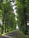 Weg van Bomen 1 Stock Foto