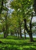 Weg van Bomen Stock Foto's