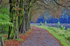 Weg van bomen Stock Foto
