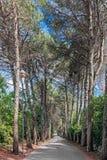 Weg van bomen Stock Afbeeldingen