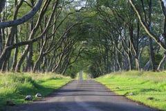 Weg van bomen Royalty-vrije Stock Afbeeldingen