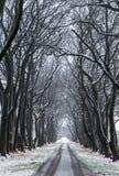 Weg van bomen Stock Afbeelding