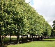 Weg van bomen Royalty-vrije Stock Fotografie