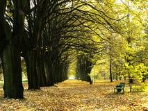 Weg van bomen Royalty-vrije Stock Afbeelding