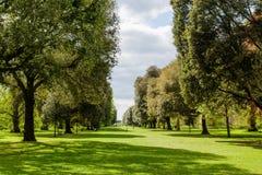 Weg van bomen bij Kew-Tuinen Stock Afbeeldingen
