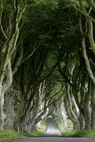 Weg van bomen Donkere Hagen in Ierland Stock Foto's
