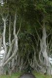 Weg van bomen Donkere Hagen in Ierland Royalty-vrije Stock Foto's