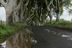 Weg van bomen Donkere Hagen in Ierland Royalty-vrije Stock Foto