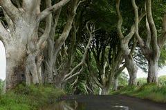 Weg van bomen Donkere Hagen in Ierland Stock Foto