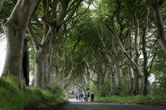 Weg van bomen Donkere Hagen in Ierland Stock Afbeeldingen