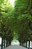 Weg van bomen stock fotografie