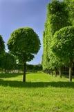 Weg van bomen in goed-verzorgd park. Stock Foto's