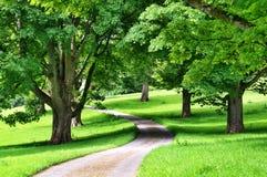 Weg van bomen met een weg die door winden stock afbeeldingen