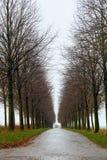 Weg van bomen Tunnel van bomen Één puntperspectief Stock Foto's