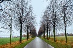 Weg van bomen Tunnel van bomen Één puntperspectief Stock Afbeeldingen