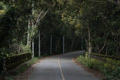 Weg van bos met oude brug Stock Afbeeldingen