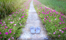 Weg van de Portulaca grandiflora bloem stock foto