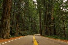 Weg van de Reuzenweg door de Californische sequoia's stock foto's
