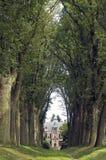 Weg van eiken bomen en kasteel Den Bramel Stock Afbeelding