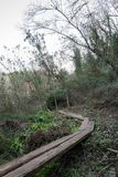 Weg van houten boomstammen door een bos Boslandschap stock foto