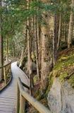 Weg van houten planken onder het bos stock afbeeldingen