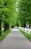Weg van lindebomen Royalty-vrije Stock Foto