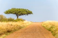 Weg van Maasai Mara stock foto
