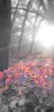 Weg van rode bladeren Royalty-vrije Stock Foto's