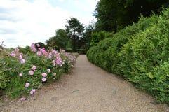 Weg van rozen Stock Foto